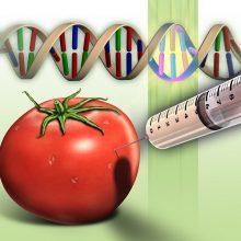 Первая генетическая война